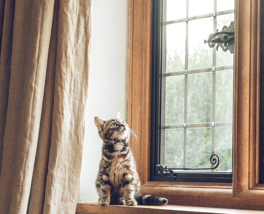 pisica-in-casa-noua